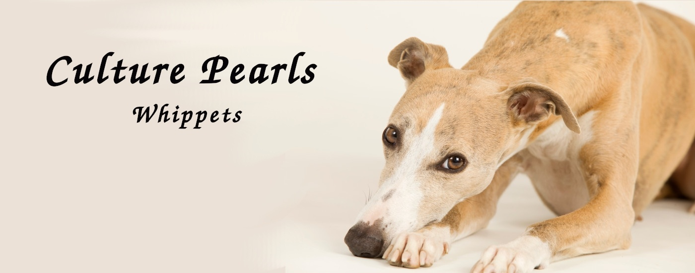 Culture Pearls Whippets